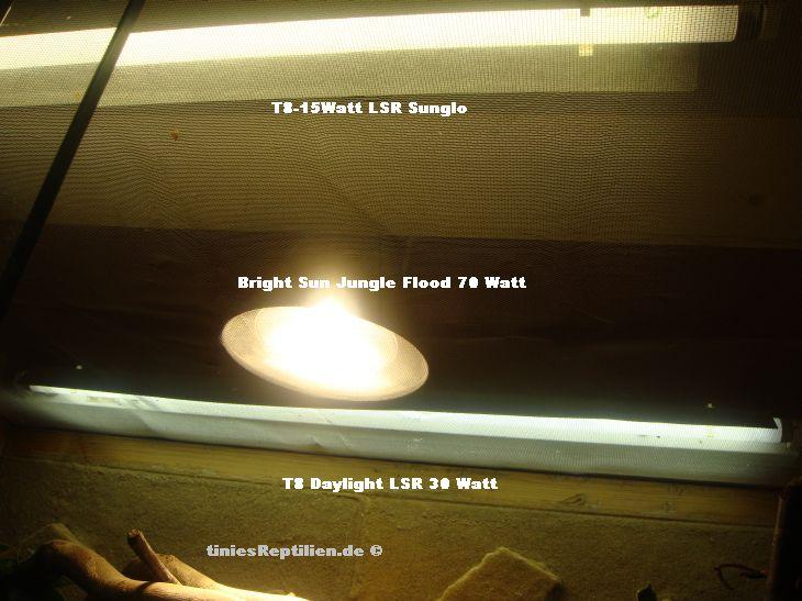 Großartig Terrarium Beleuchtung Fotos >> Terrarium Beleuchtung ...