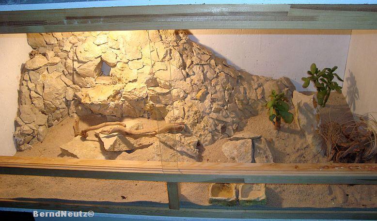 Steinwand Styropor : Besatz : 1.2 Paroedura picta - Madagaskar ...