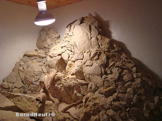 Steinwand Styropor : Steinwand Styropor : Großkopfgecko - Terrarium ...